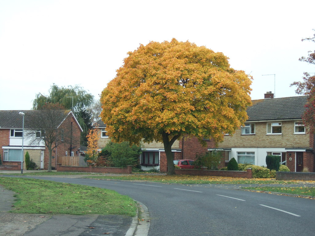 Image by Richard Humphreys -a yellow tree in front of a house in Peterborough